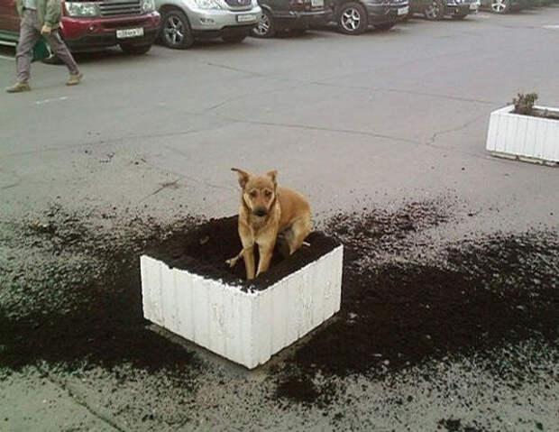 boese Hunde 22