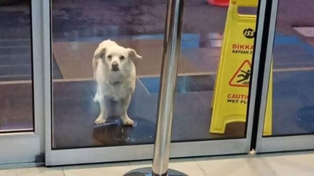 Верный пес прождал хозяина у больницы шесть дней