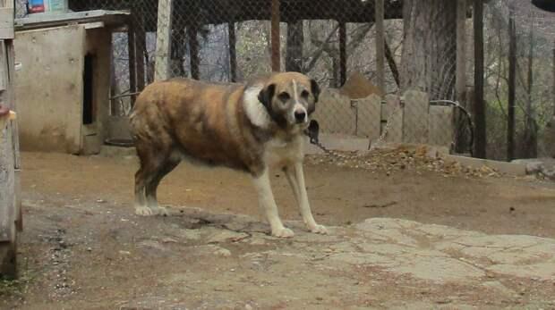Специалистами Южнобережного отдела ветеринарии и контроля проведена внеплановая выездная проверка по вопросу содержания домашних животных (собак)
