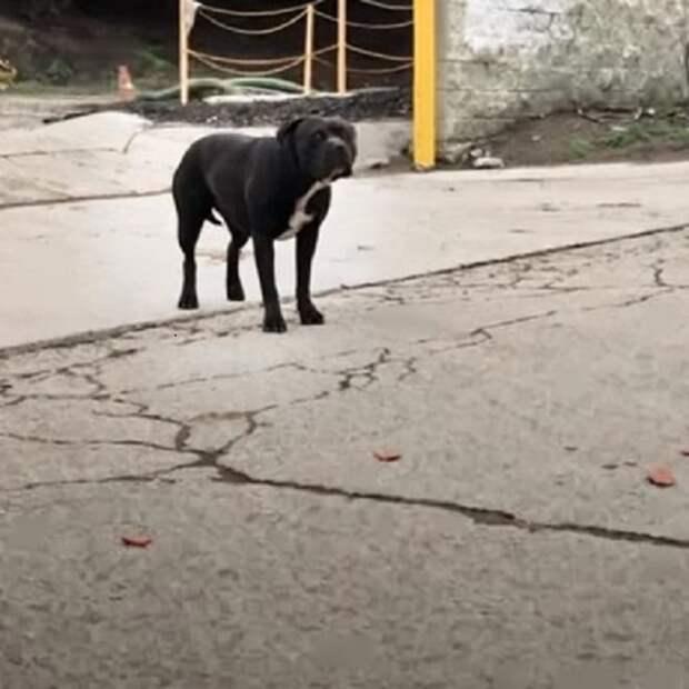 Женщина ловила собаку, но ловушка не сработала. Животное убежало и с той поры перестало доверять человеку