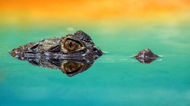 Ранние тетраподы скорее всего охотились как крокодилы—караулили, выглядывая из воды / Sven Kopping