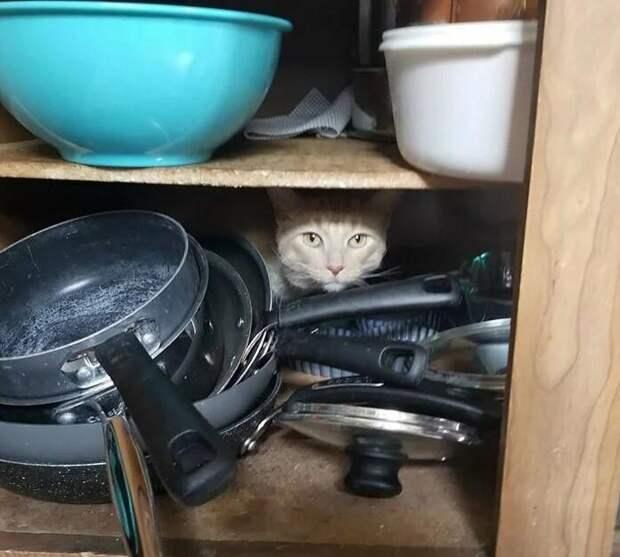История Оливера — кота, который все держит под контролем