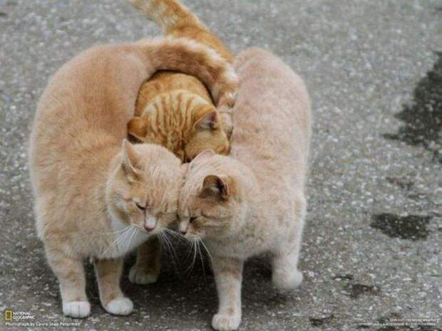 Смешные картинки и красивые фотографии из сети (12 фото)