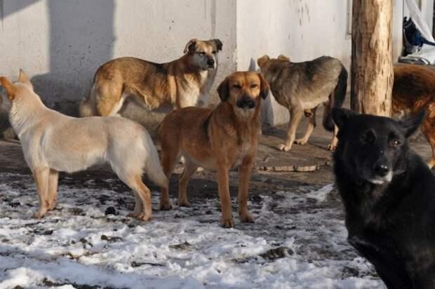 Собачья любовь и гаишник