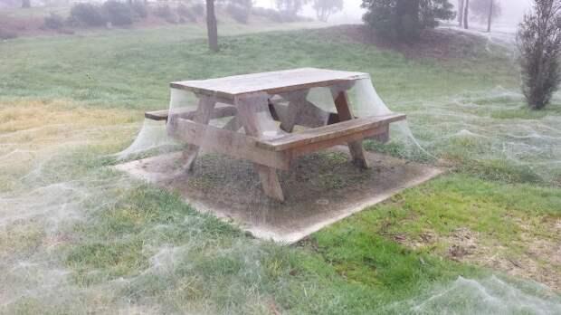 Сезон пауков, который начался в Австралии, выглядит устрашающе!
