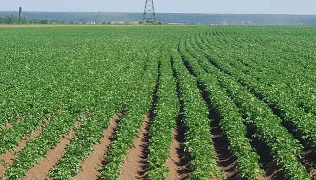 В Подмосковье во время ярового сева засадили 42,4 тыс га земель