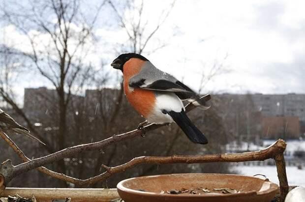 Остаться в живых. Как поддержать птиц зимой