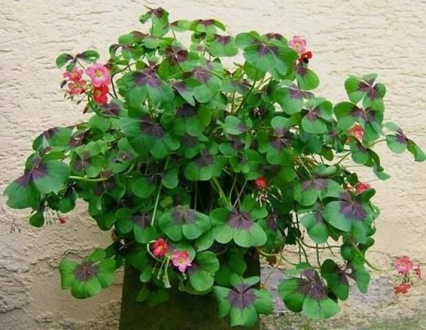Чтобы в доме было счастье, нужно завести эти растения