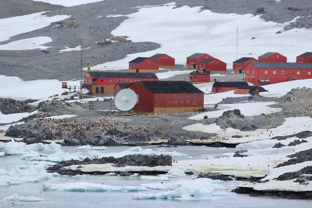 Пандемия коронавируса распространилась на территории Антарктиды