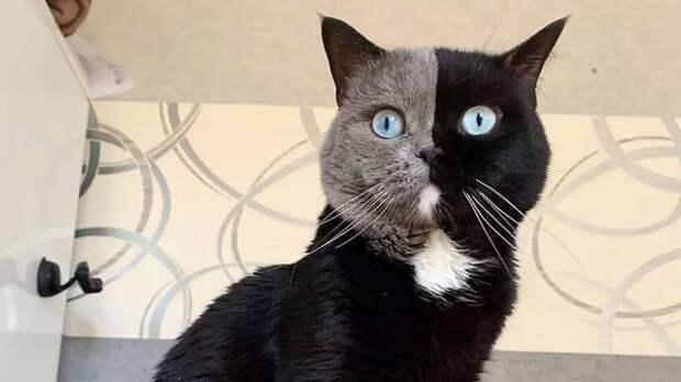 Кот имеет 243 тыс. подписчиков в Instagram.