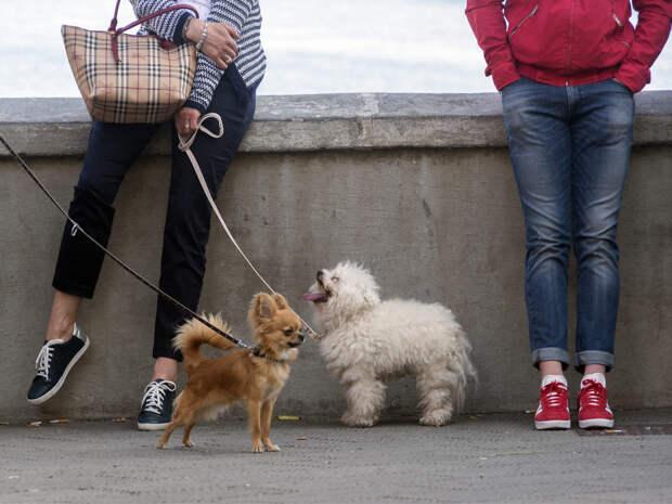 Жители и гости Твери могут своими глазами увидеть «Собачий вальс»