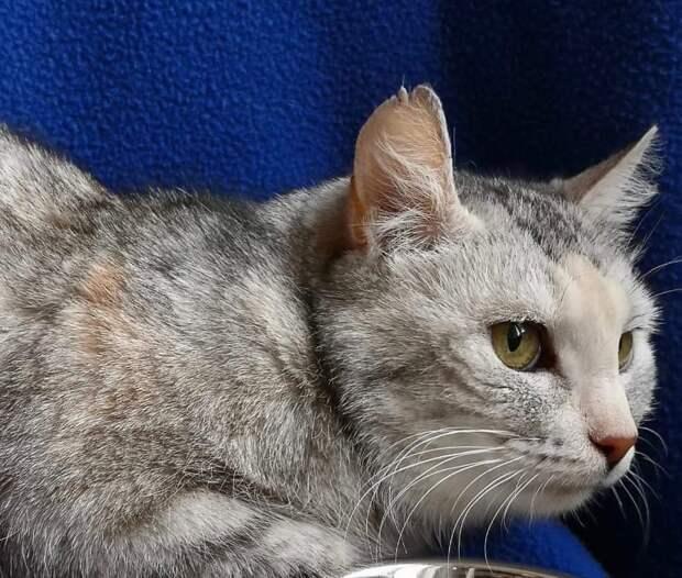 Может быть она всё пережила и преодолела, чтобы стать именно вашим преданным другом?? Присмотритесь к необычайно красивой кошке!