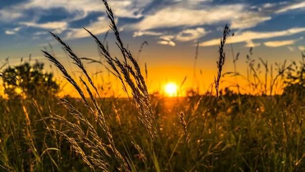 В Тюменской области выявлено 706 тонн некачественных семян