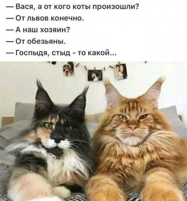 Встречаются два друга. -Ну как дела?...