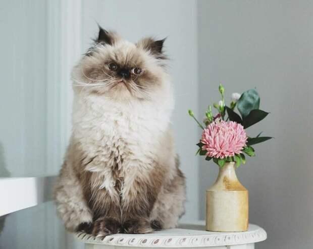 А возможно он просто кот и не скрывает своё отношение к миру, как это делают другие хвостатые хитрюги животные, кот, милота, мимика, морда, ненависть