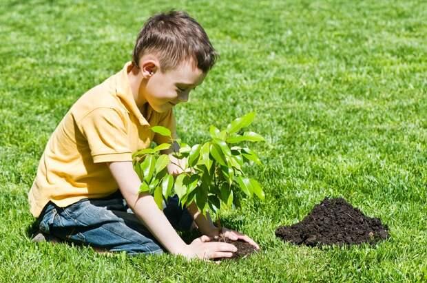 Когда этот мальчишка вырастет, и дом построит, и сад посадит, и счастлив будет!