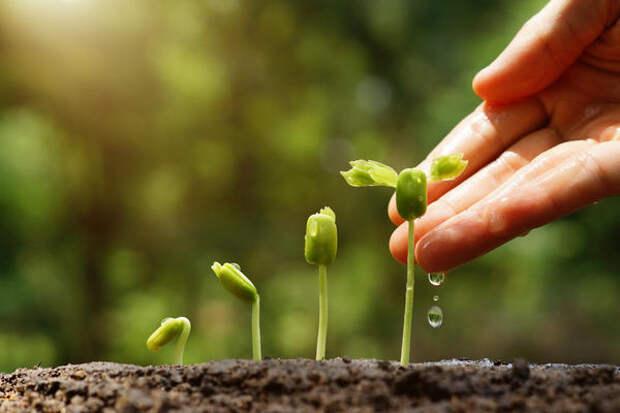 Содовый раствор можно с успехом использовать в качестве удобрения для растений