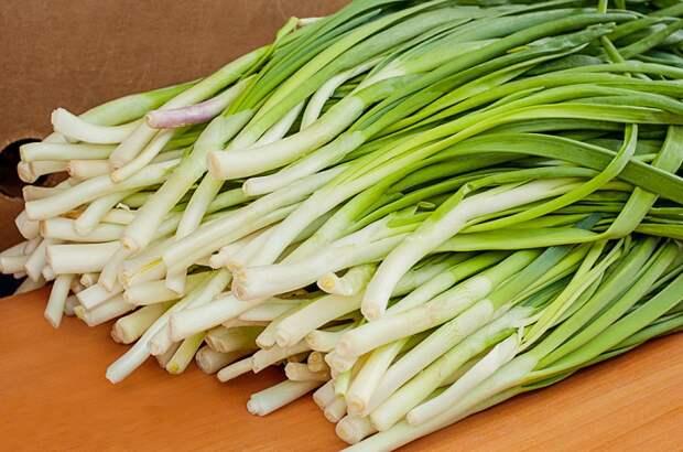 как выращивать лук в домашних условиях