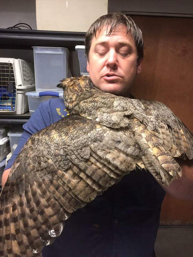 Как только ветеринар вернулся, сова не только затанцевала от радости, но еще и обняла своего спасителя  животные, объятие, сова, спасение