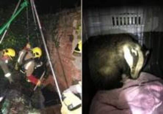 Команда пожарных приехала спасать барсука