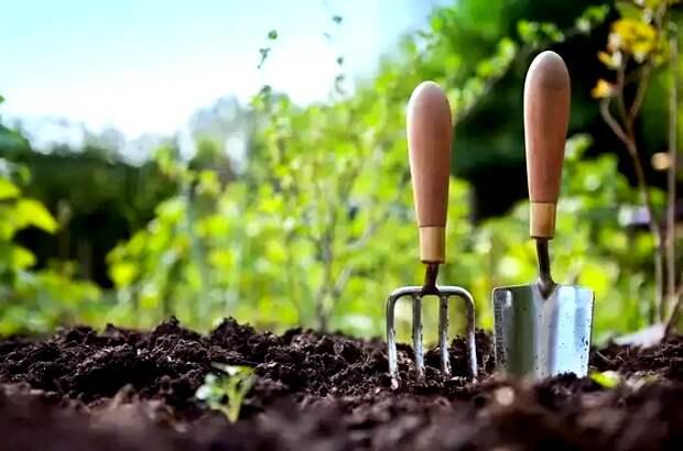 Растения, которые не любят перегной: 6 огородных культур, которые органикой не подкармливают