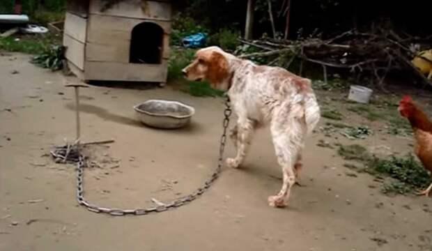 Его хозяин перестал охотиться и решил заморить пса голодом...