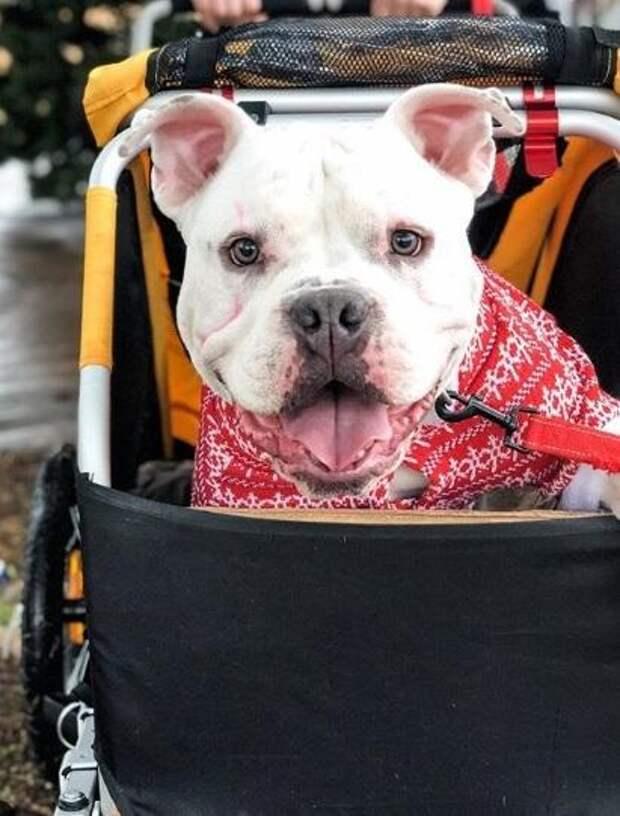 История о больном щенке Тонке, который умел лишь ползать, но с доброй хозяйкой научился ходить