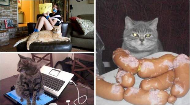 Когда кот в доме хозяин кот, котики, прикол, юмор