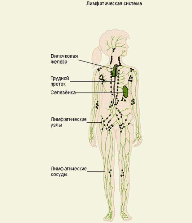 Что чистит организм?