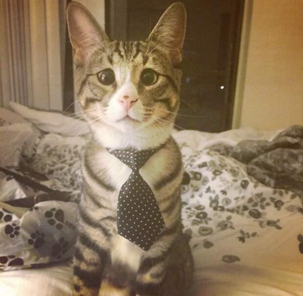Взволнованные кот Бум животные, звёзды, интернет, коты, юмор