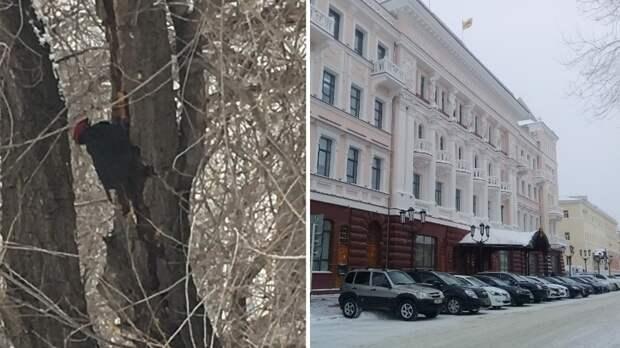Символом Оренбурга предлагают сделать краснокнижного дятла