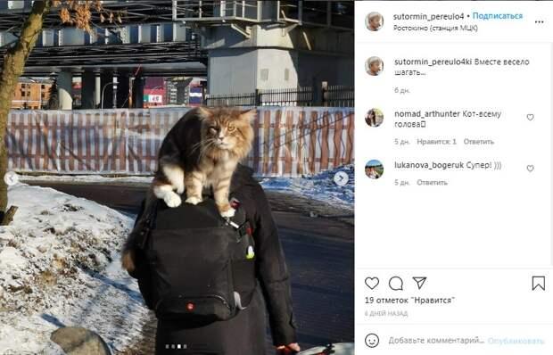 Фото дня: у станции «Ростокино» кот оседлал хозяина