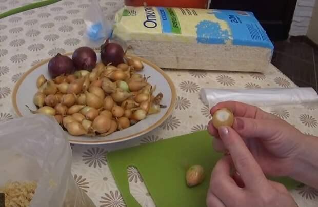 как выращивать лук на зелень