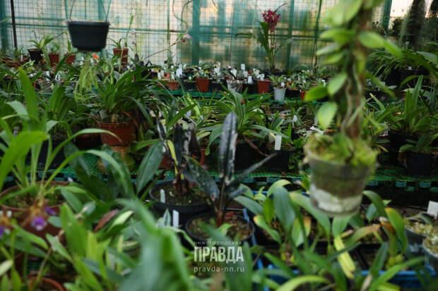 Вокруг света, «Волжские огни» и фотосессии «ню»: чем удивляет ботанический сад Нижнего Новгорода