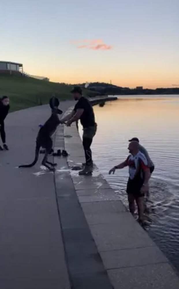 Велосипедисты спасли кенгуру из ледяной воды и животное поблагодарило за это