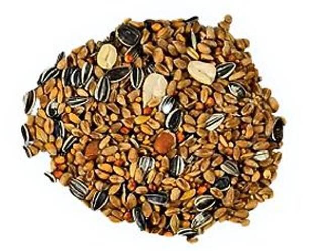 Зерновые смеси приманят воробьев, синиц и зябликов