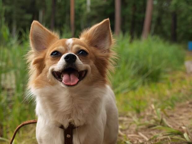 Кинолог развеял мифы о содержании маленьких собак