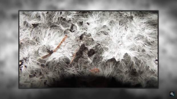 Видео: Необычная теория зарождения жизни на Земле — люди произошли от грибов