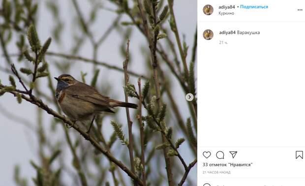 Фото дня: ленивая птица