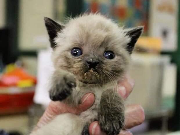 Тощий котенок был серьезно болен, но люди не позволили ему остаться несчастным