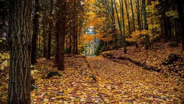 В cевастопольских лесах планируют установить камеры