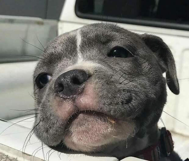 Счастье можно измерять в собаках