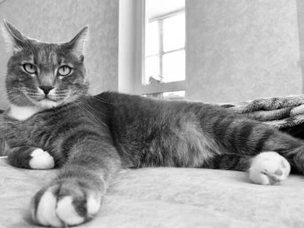 За кота, оберегающего от коронавируса, в Хабаровске запросили 6 млн рублей
