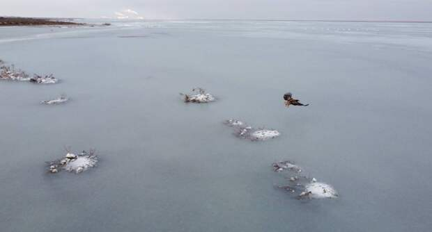 Место зимовки редких водоплавающих птиц покрылось льдом в Актау