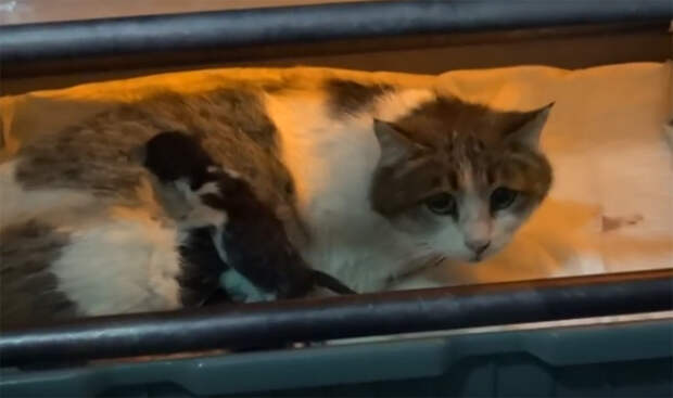 Беременная кошка пришла рожать в центр семейного здоровья