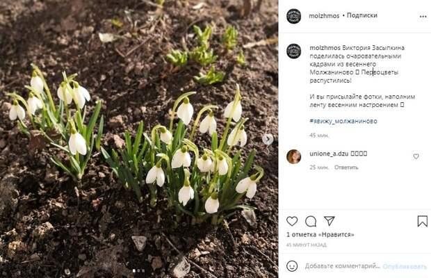 Фото дня: в Молжаниновском распустились первоцветы