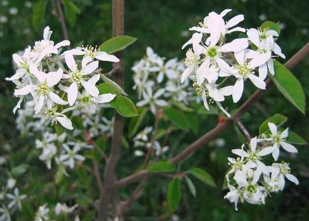 Букет из веток цветущих деревьев  (способы разбудить ветки)