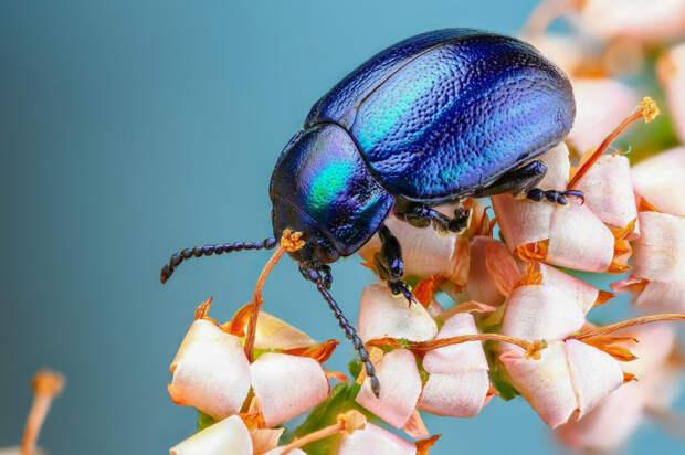Самые красивые и интересные жуки планеты