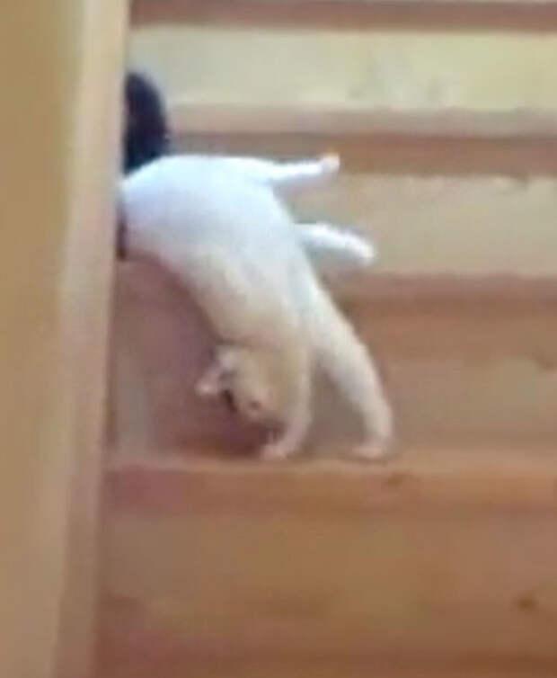 Кот нашёл оригинальный способ спускаться по лестнице: его техника покорила миллионы людей!