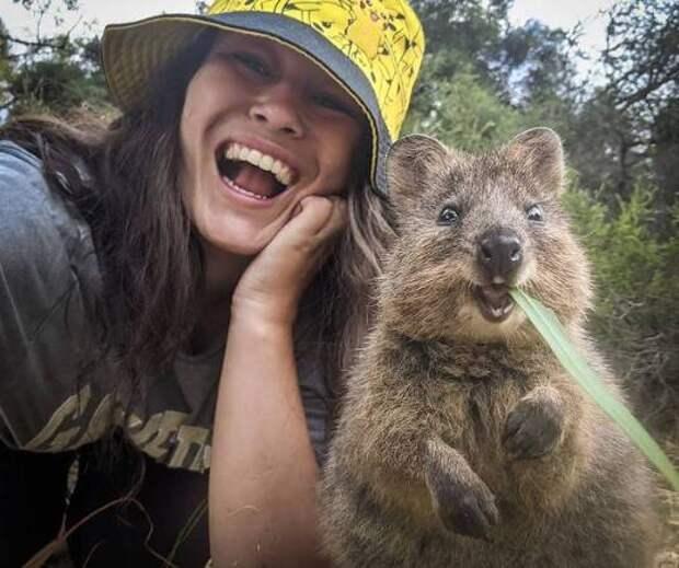 Квокка - самый улыбчивый зверек на планете: 15 фото
